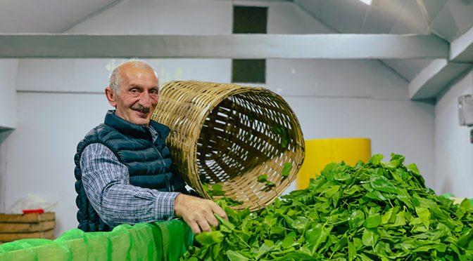 ბიო-ჩაი და თევზის წარმოება – მწვანე ეკონომიკის მხარდაჭერა საქართველოში
